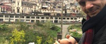 https://www.tp24.it/immagini_articoli/04-04-2020/1585996863-0-messina-sindaco-luca-ritira-uova-insalata-citta.jpg