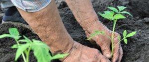 https://www.tp24.it/immagini_articoli/12-12-2019/1576144153-0-biologico-milioni-aziende-agricole-siciliane.jpg