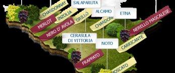https://www.tp24.it/immagini_articoli/15-02-2020/1581788717-0-vino-prodotte-milioni-bottiglie-sicilia-2019.png