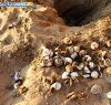 https://www.tp24.it/immagini_articoli/15-08-2021/1629015043-0-la-meraviglia-della-natura-a-scala-dei-turchi-nate-74-tartarughine-caretta-caretta.jpg