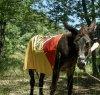 https://www.tp24.it/immagini_articoli/16-08-2021/1629113159-0-da-pantelleria-al-piemonte-nbsp-sul-dorso-di-un-mulo-per-riscoprire-la-civilta-rurale.jpg
